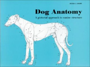 9780851316369 Dog Anatomy By Peter Goody