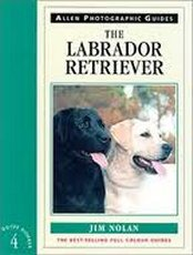 Labrador Retriever: ADG 4
