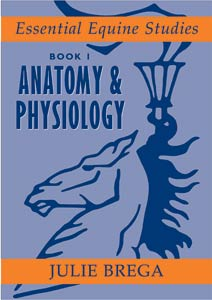 Anatomy & Physiology : Essential Equine Studies Book 1